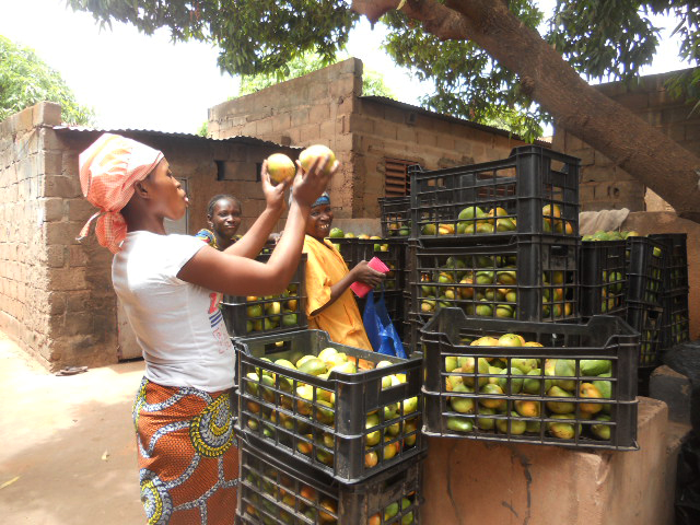 In order to improve the transportation and storage conditions of the fresh fruit, gebana and its customers have been sending fruit boxes to Burkina Faso for many years, which are swapped for dried mango from the processing facilities.