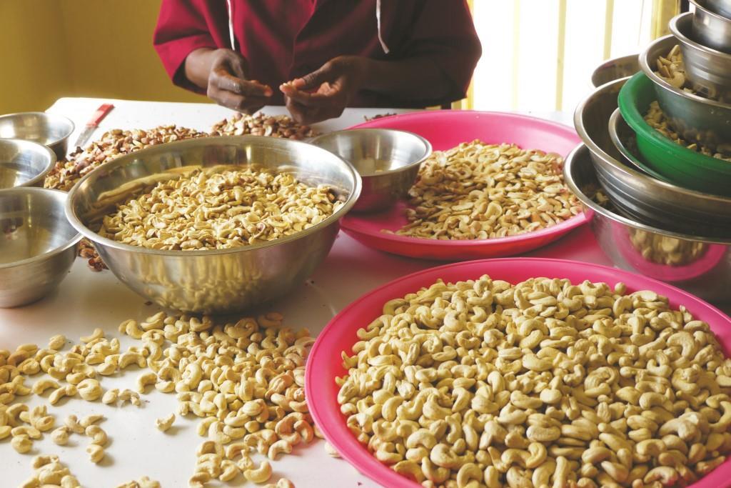 Ein Grossteil der Beschäftigten arbeitet in der Verarbeitung von feinen Bio Cashew Nüssen. Diese können Sie jetzt über unseren grossen Vorverkauf beziehen.
