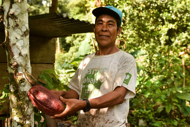 Aquilino pflückt eine Kakaofrucht.