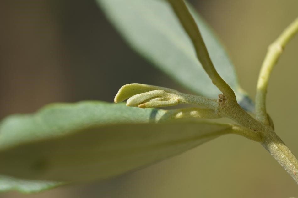 Junge Blätter beginnen zu spriessen...