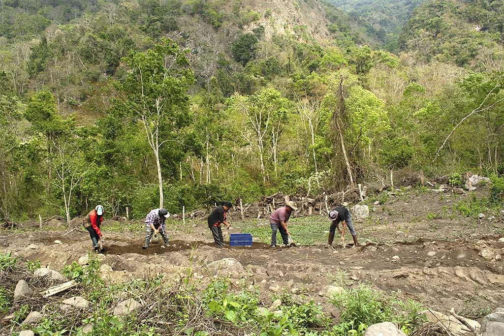 Im subtropischen Zhemgang werden die Pflanzen von Hand ausgesät (Foto: Cheku Rangdrel)