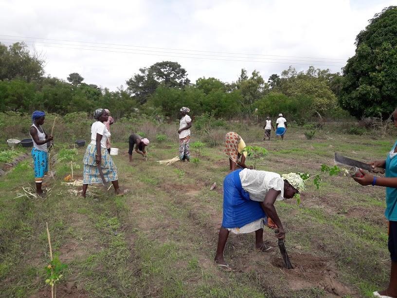 Hier werden die Moringabäume gepflanzt