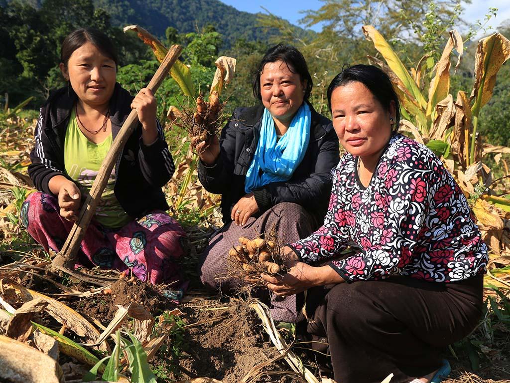 Mitglieder der Takabi Frauengruppe bei der Kurkumaernte (Foto M. Beck)
