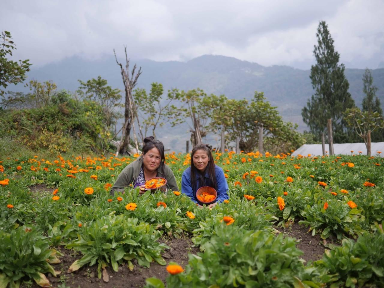 Choki und Yangday zwischen Ringelblumen.