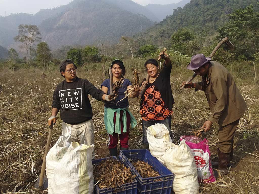 Die Ernte der aromatischen Kurkuma- und Ingwerwurzeln (Foto: Cheku Rangdrel)
