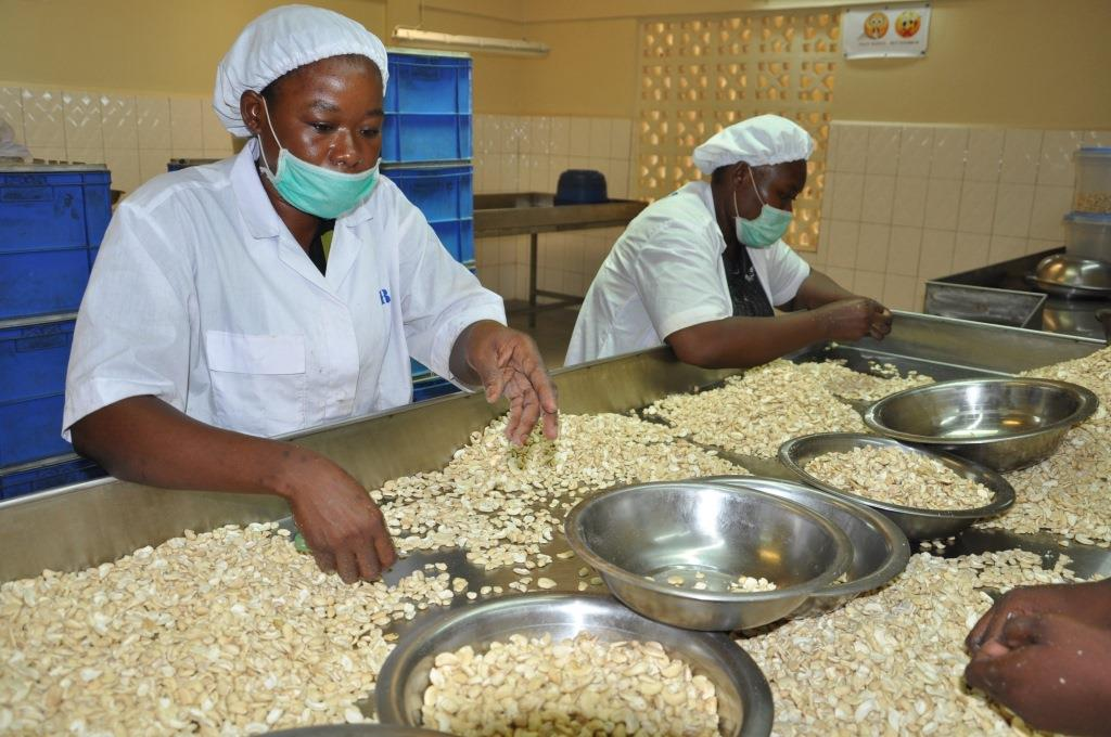 The raw cashews are processed by hand. This creates jobs and enhances value creation at source.