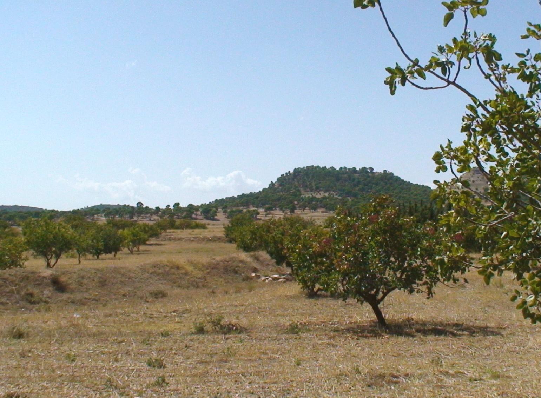 Die Pistazien und Mandeln von Skander Hamzaoui wachsen auf 1200 m ü.M.