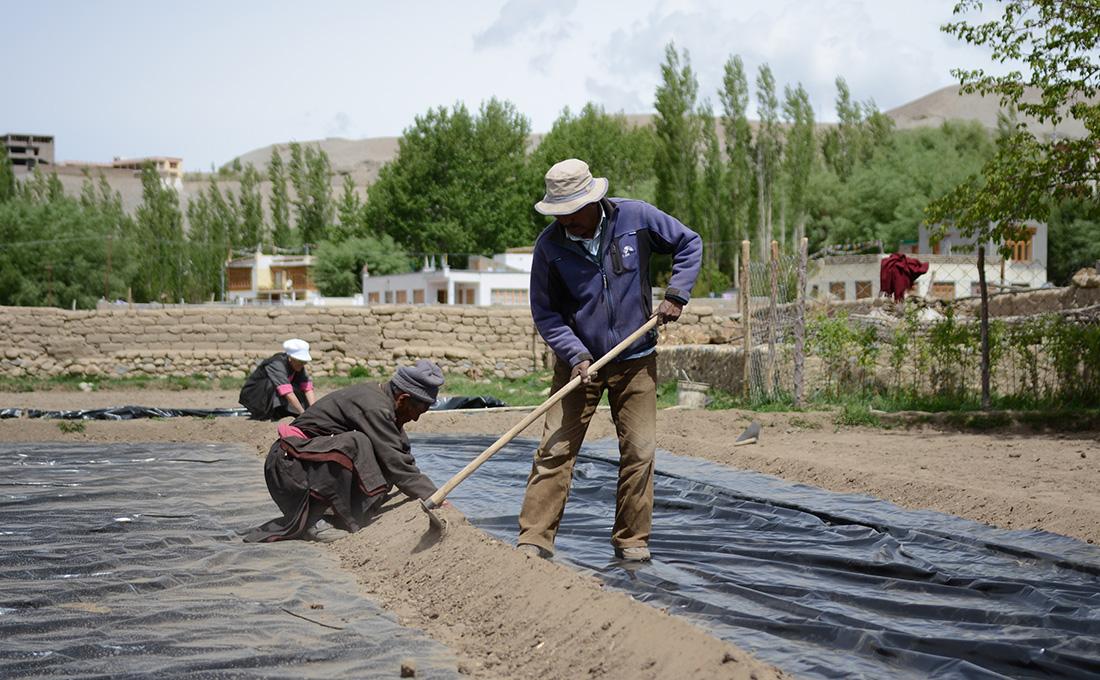 Feldarbeiten im Dorf Peyh