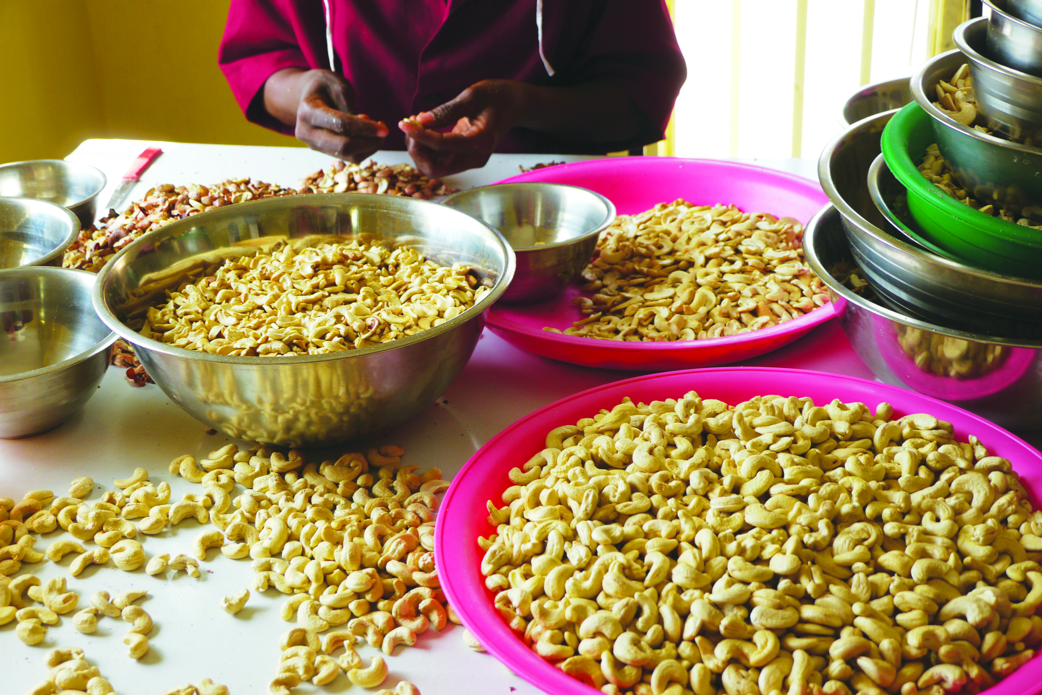 A large proportion of the employees are involved in the processing of quality organic cashew nuts. These can now be obtained through our advance sales system.